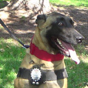 La Policía Local de San Sebastián de los Reyes ya ha comenzado sus primeras actuaciones en el municipio con la unidad canina