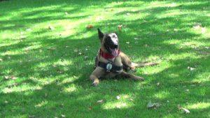 Kyra unidad canina San Sebastián de los Reyes Policía Local